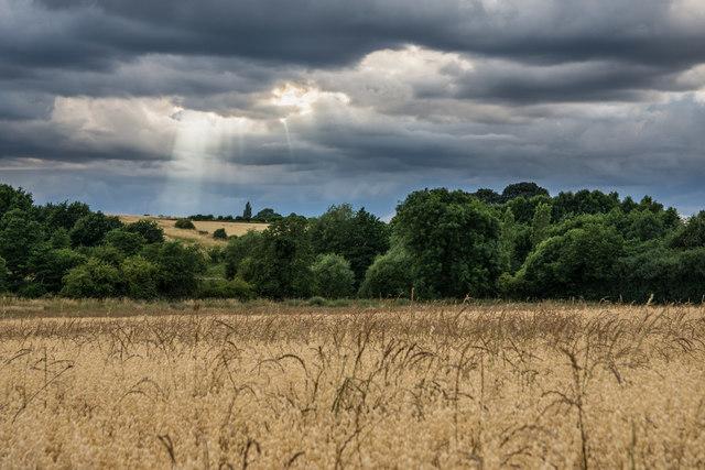A field near Packington
