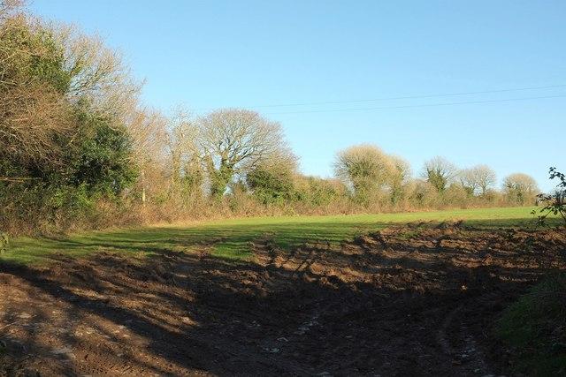 Field near Tregreenwell