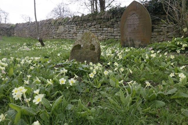 Primroses Around the Grave