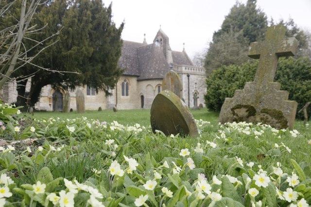 View across the primroses