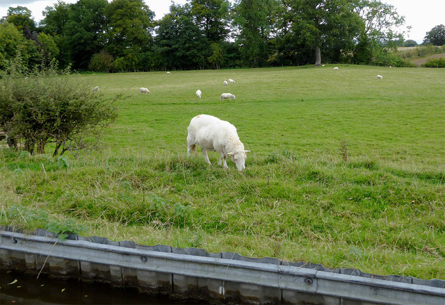 Canalside grazing near Welsh Frankton, Shropshire