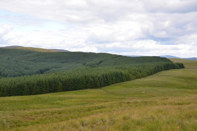 Forestry plantation above Whitehope Rig