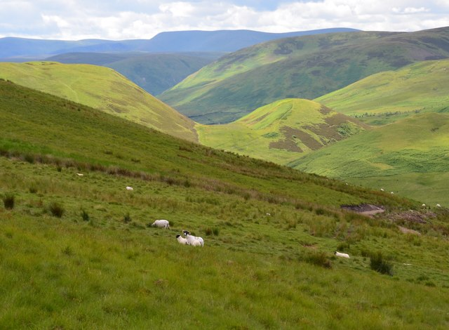 Yarrow hills from the Whitehope Burn