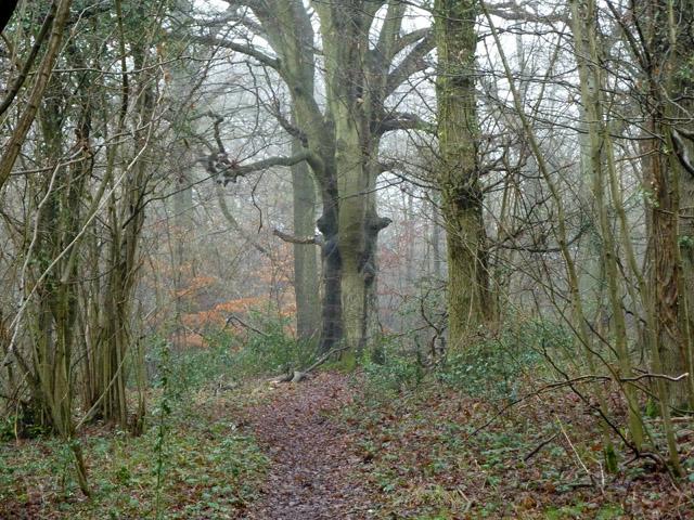 In Kings Wood