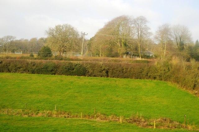 Hedge near Malt Mill Lake