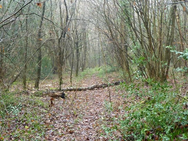 Woodland path, Kings Wood