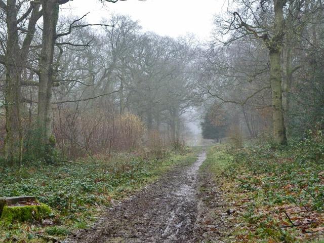 Ride in Kings Wood