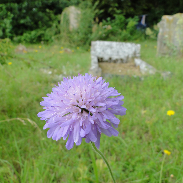 A splash of colour in the cemetery