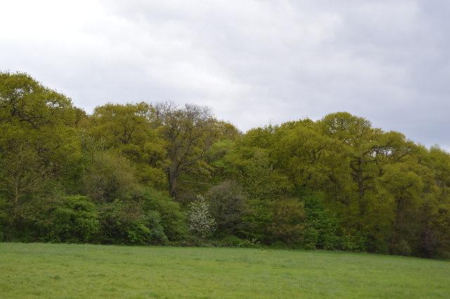 Barn Hill Woodland