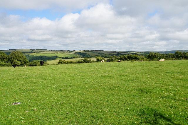 Cattle near Dean
