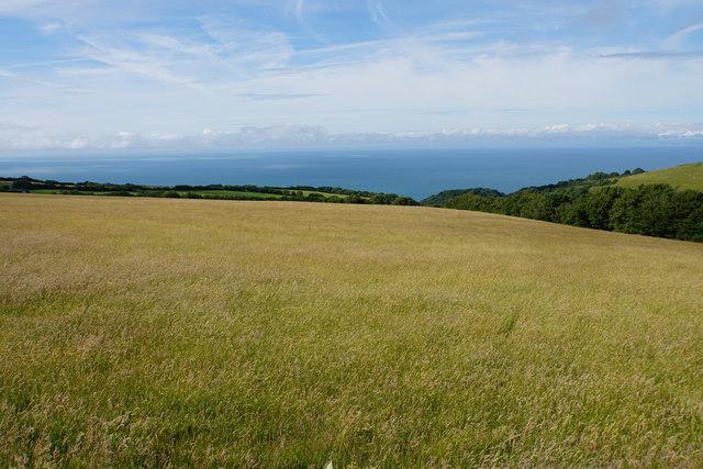Grass field above Caffyns Heanton Farm