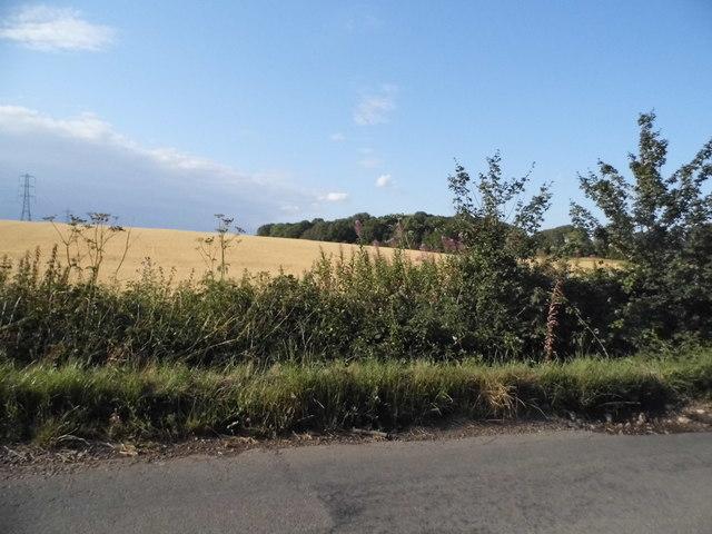 Field by Gaddesden Lane