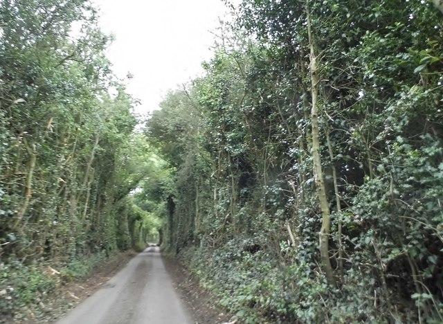 Ledgemore Lane near Jockey End