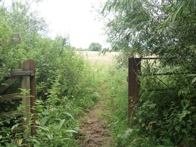 Into open fields