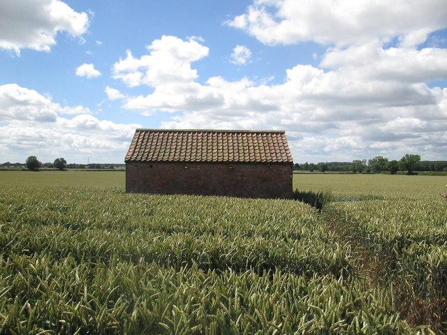 Brick  barn  in  a  corn  field