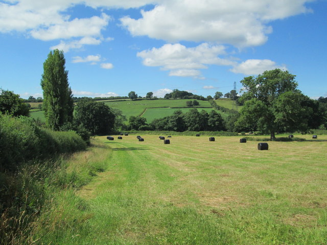 Field at Checkley