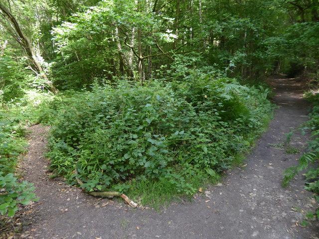 London Countryway in Surrey (8)