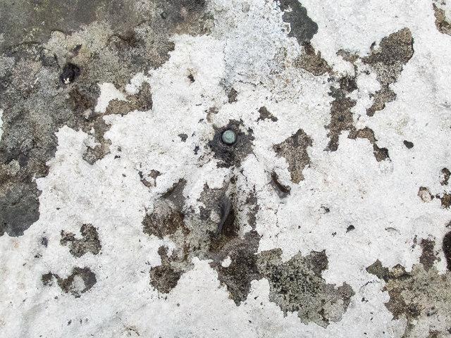 Benchmark and lichen