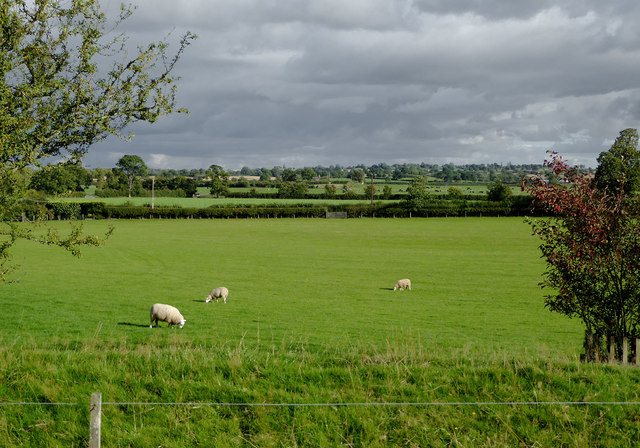 Pasture south-east of Tetchill, Shropshire