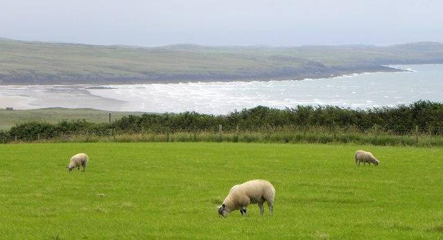 Grazing near the sea