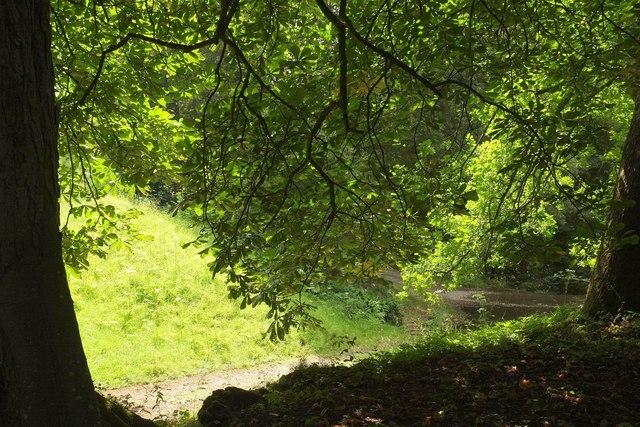 Horse chestnut, Ugbrooke Park