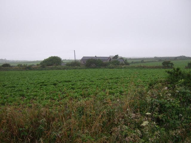 Crop field towards Chyryn