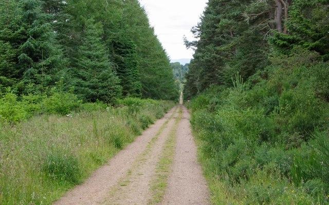 Bogbuie Wood