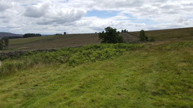 Path on western side of Park Plantation