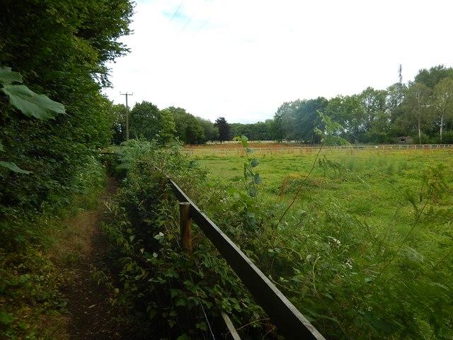 Footpath towards Shrubb's Farm