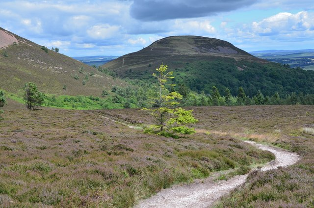 Descending Eildon Wester Hill