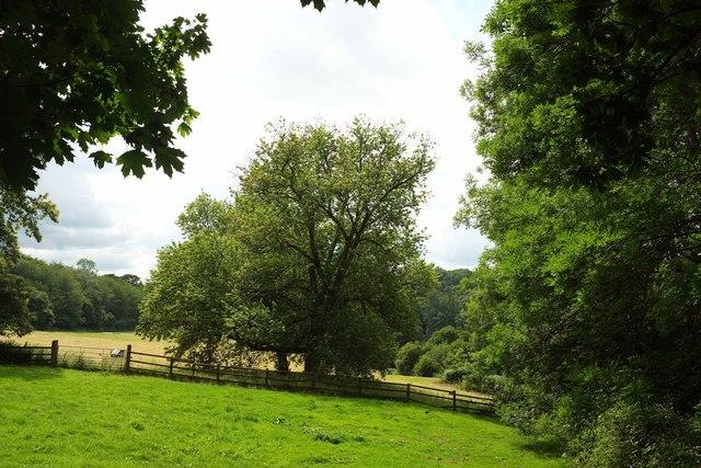 Trees, Ugbrooke Park