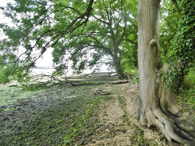 Eling, fallen trees