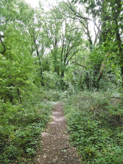 Eling, woodland path