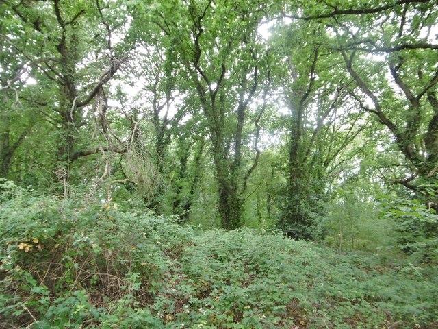 Eling, woodland