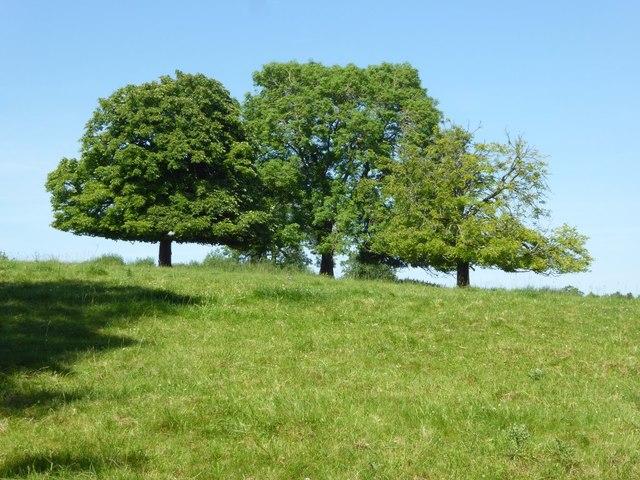 Three trees on the horizon