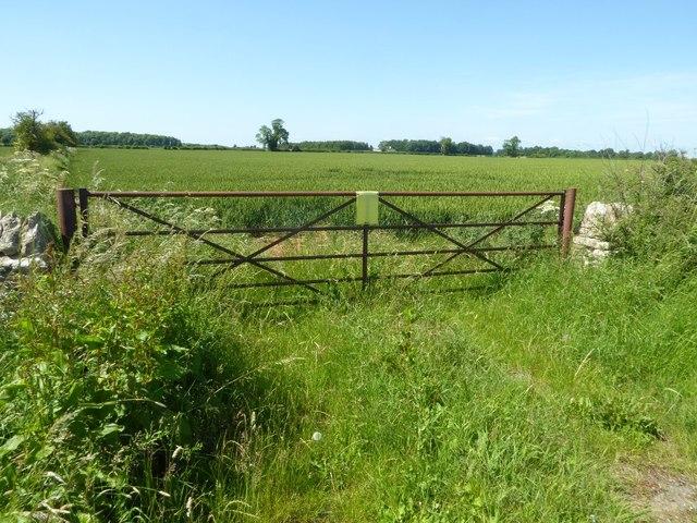 Gateway into a field of wheat