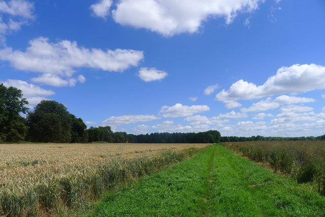 Footpath towards Kennel Plantation, Grimsthorpe Park