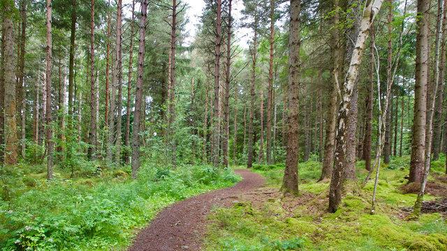 Path  into Littleburn Wood