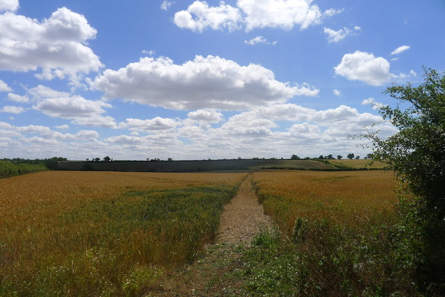 Path through ripening wheat