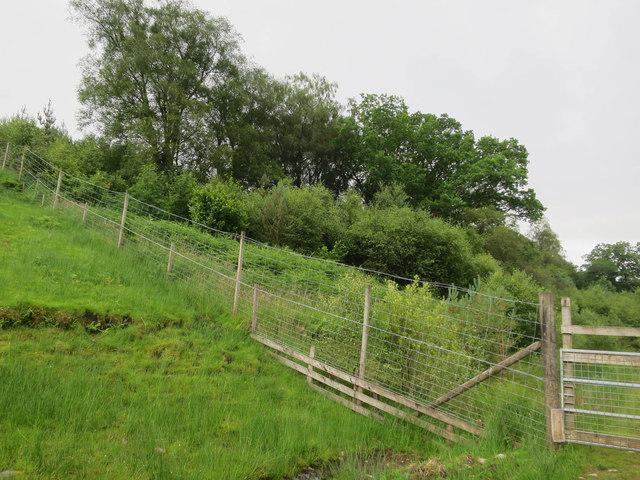 Deer fence around regenerating woodland
