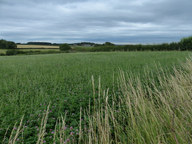 Farmland next to Beggar's Lane