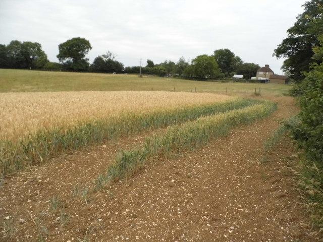 Field by Ledgemore Lane