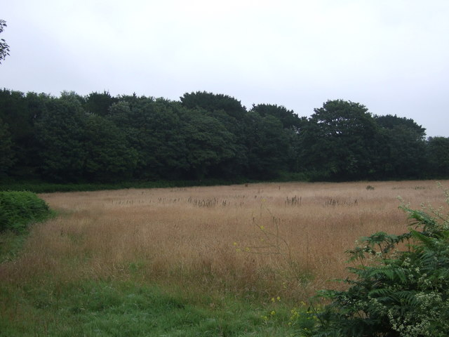 Grassland and woodland near the A394