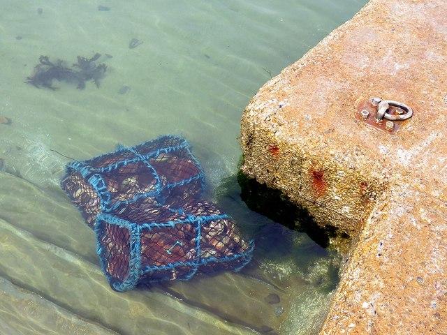 Keeping the scallops fresh off Kerrera Ferry jetty