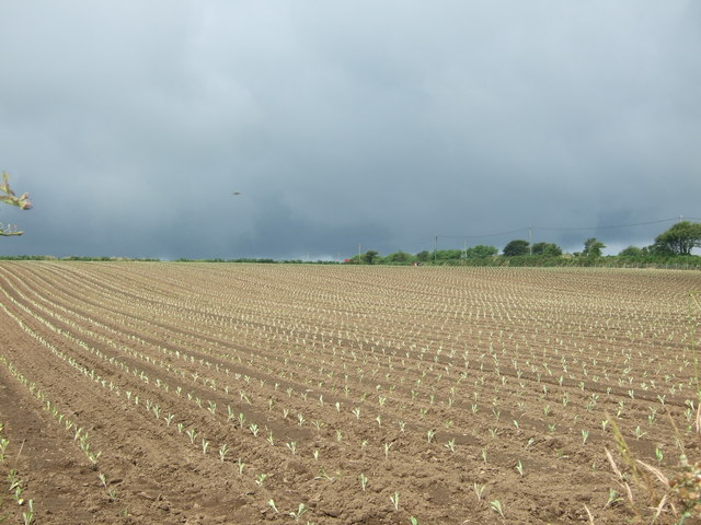 Crop field near Sheffield