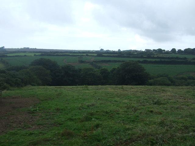 Grazing near Penmennor Farm