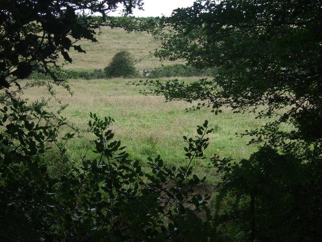 Grazing near Bosanketh Farm