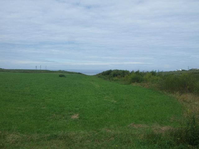 Grassland, Sennen