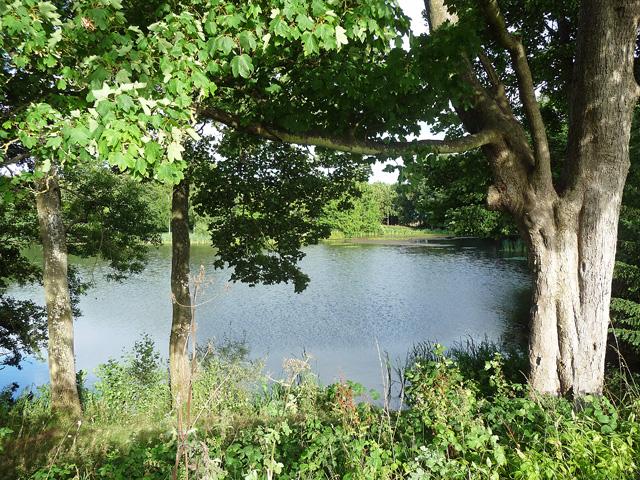 Swan Pool, Shobdon