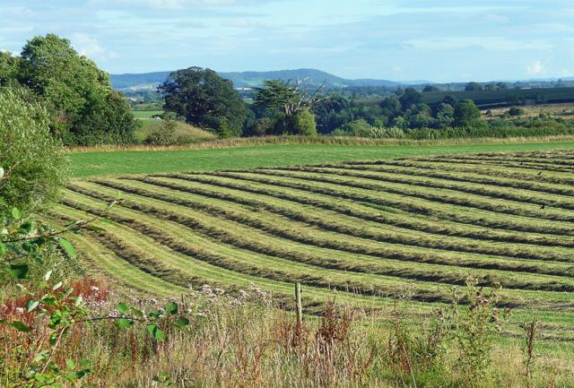 Farmland near Stansbatch